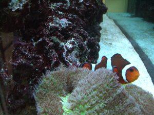 Fin-Tastic Fish Feeding