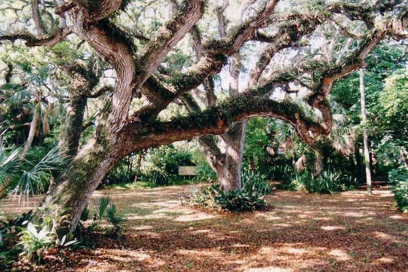 Old-Tree_TOM-BAUMKER