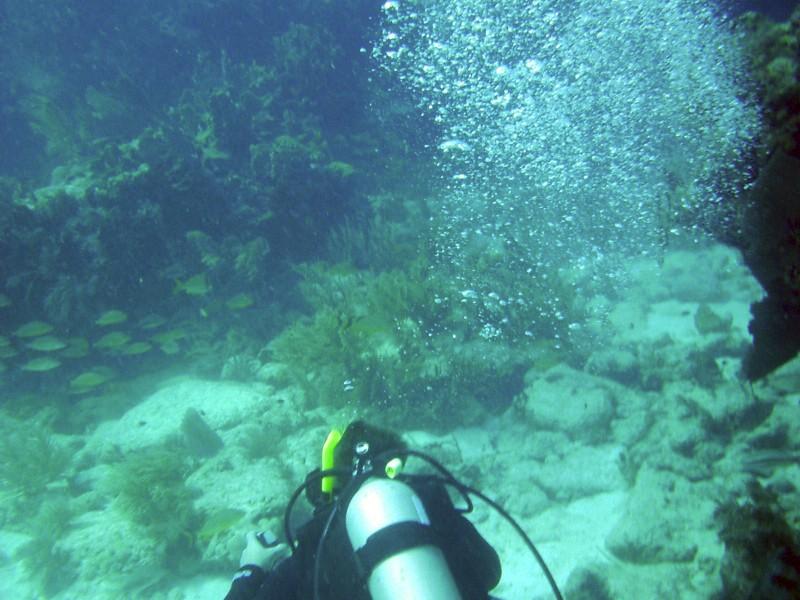 Diver-Bubbles