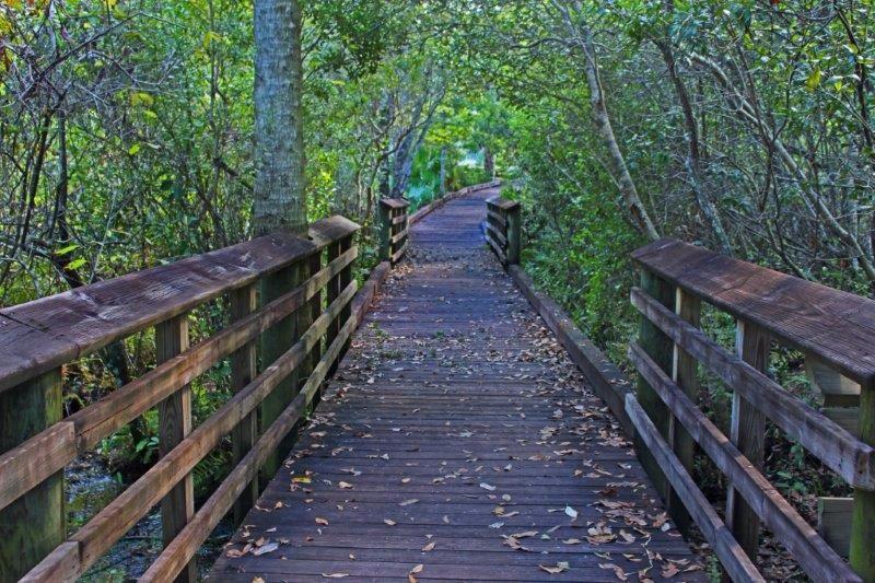 eco-boardwalk