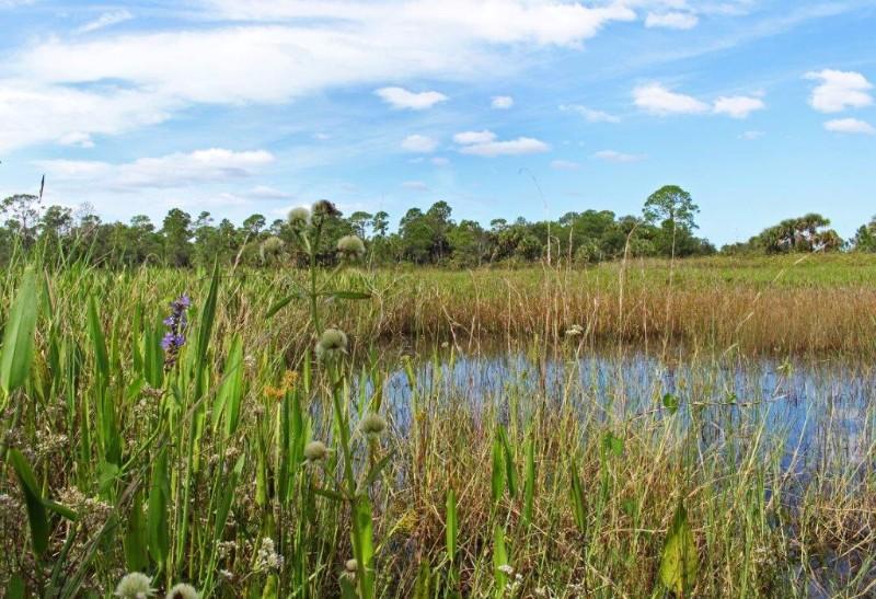 color-marsh