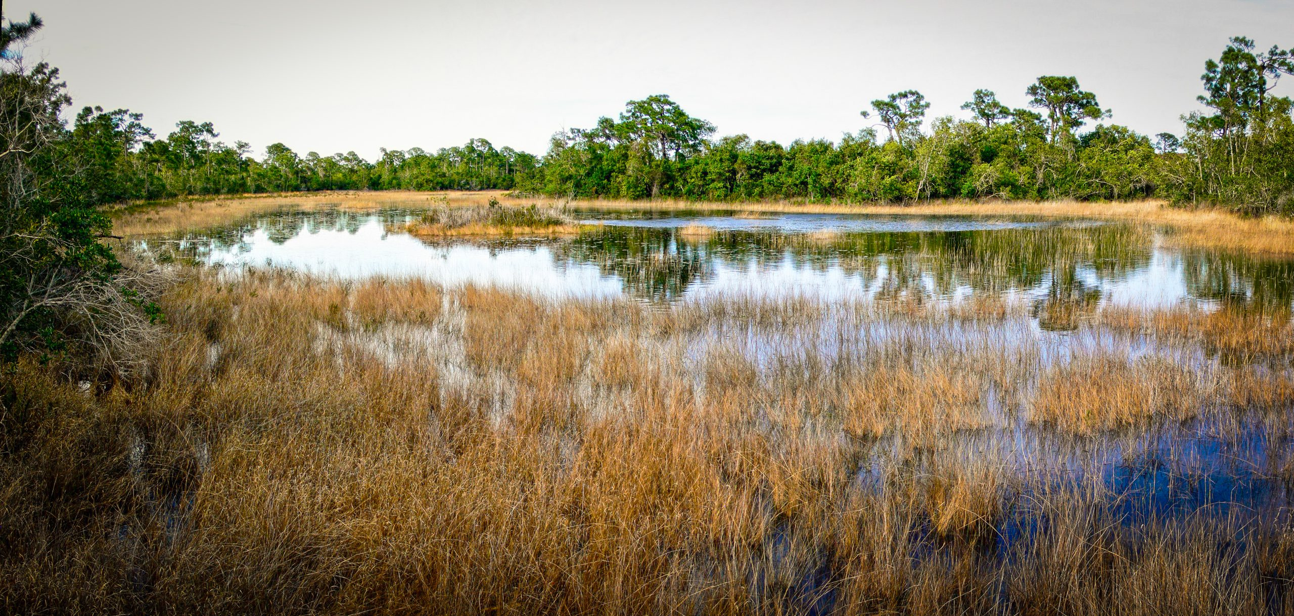 Grassy water view on nature preserve
