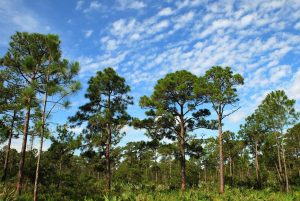 Treeline and blue sky